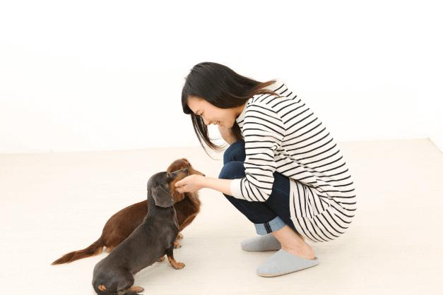 犬・猫ペットブリーダー