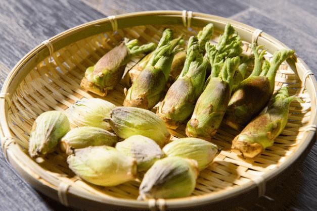 山菜ソムリエ