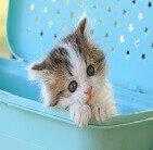 猫の検定講座