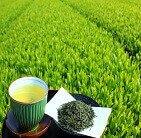 日本茶・お茶検定