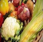 オーガニック野菜検定講座・通信教育