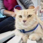 猫の育て方アドバイザー講座申込みフォーム