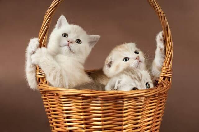 猫の育て方アドバイザー資格検定一覧
