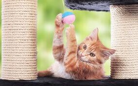 猫の健康管理インストラクター