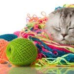 猫の育て方資格通信教育の口コミ評判
