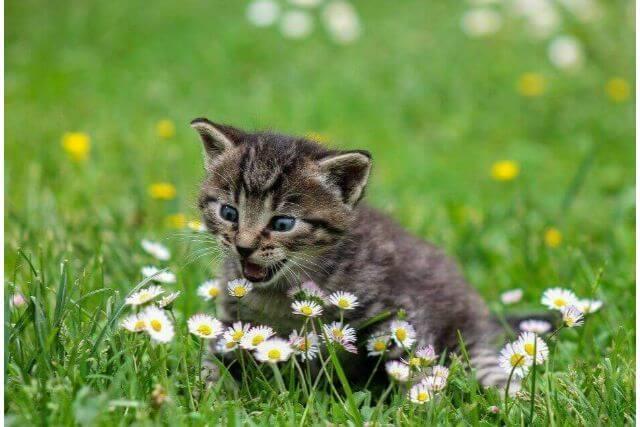 知っておきたい!猫の交配と繁殖について