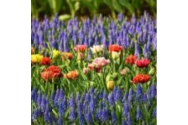 こうすれば簡単!きれいに見える花壇のレイアウトのコツ