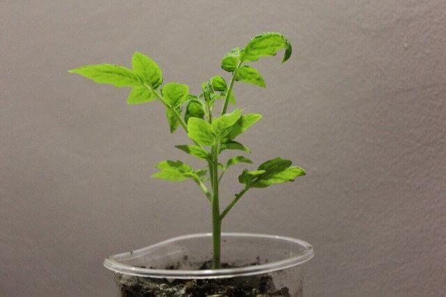 これを選べば大丈夫!悩み別おすすめのガーデニング植物