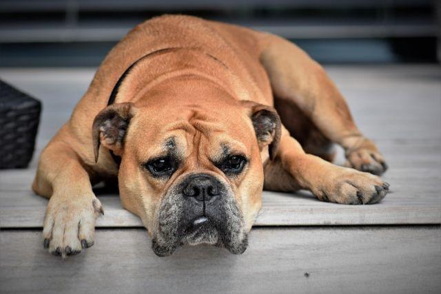 病気の可能性も!犬が無駄吠えする理由と対策について