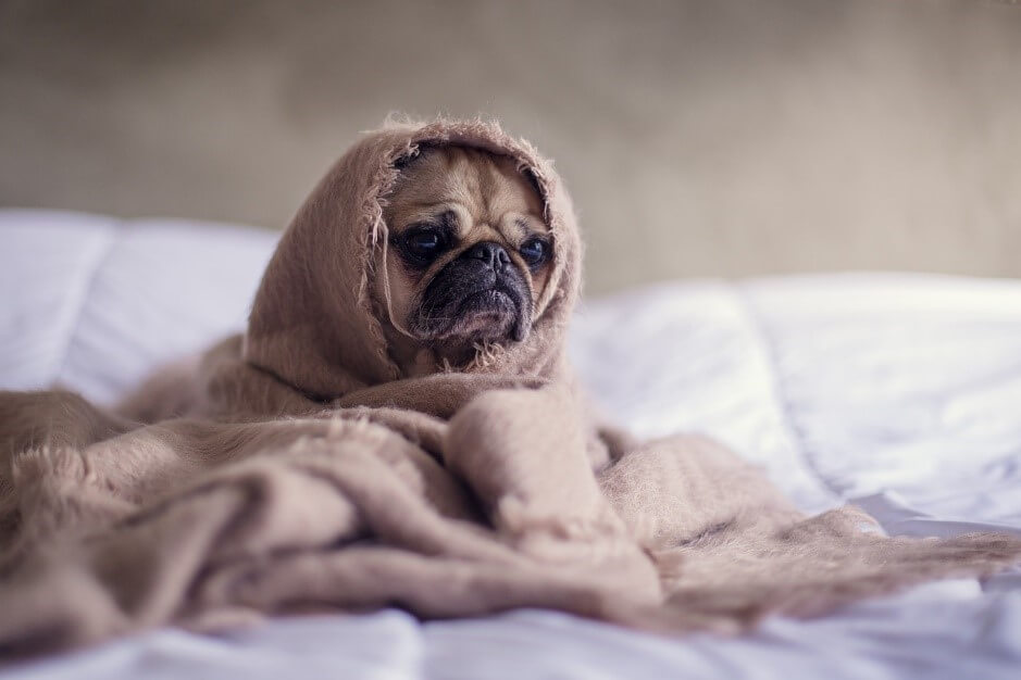 いうことを聞かないのは誰のせい?犬の問題行動の原因と飼い主の意識改革
