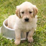 子犬のしつけ方法は?始める時期と順番について