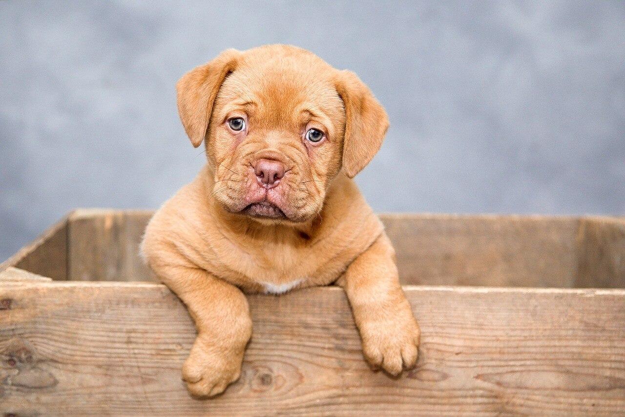 意外なことが原因だった 犬が甘噛みする理由と対策について ドッグ