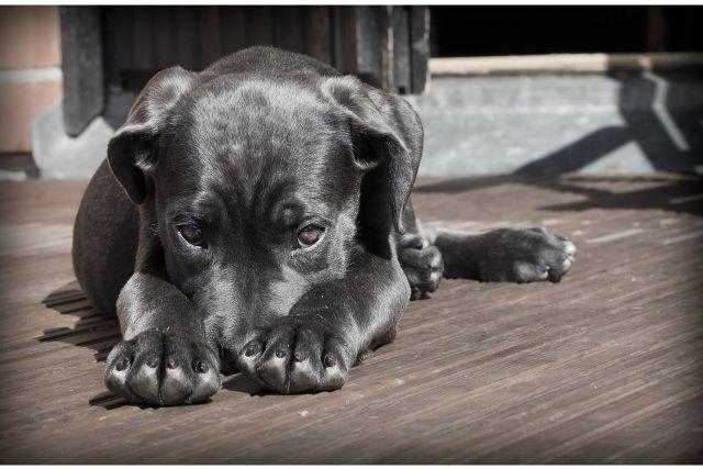 しつけに役立つ犬のマズルコントロールとは?基本知識とやり方について