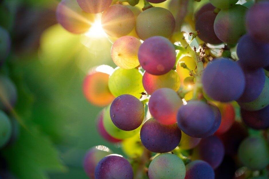 こんなにあった!ワインに使われるぶどうの品種について