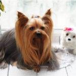 自宅で犬の散髪は出来る?トリミングの基本情報と自宅カットの方法について