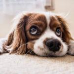 犬のひげはカットするべき?犬のひげにカットが必要な理由と方法について