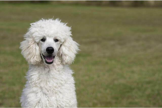 どんなものが便利?犬のバリカンの種類や特徴と選び方について