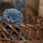 どんな子がいいの?初めて猫を飼うときの猫の選び方と準備するもの