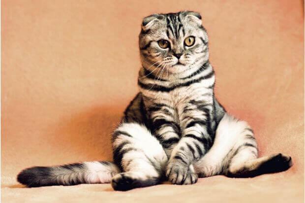 どんなものがある?自分にもなれる?猫に関わる仕事の種類と就業方法