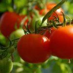 仕事にもなる!家庭菜園やベランダ菜園の資格を取得するメリット