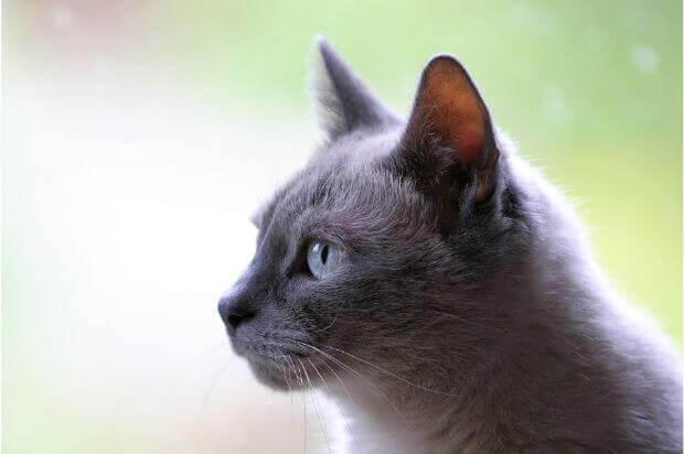 自宅でケアできる!猫の爪を切る方法と頻度について