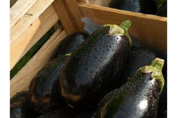 プランター栽培の魅力と始め方について