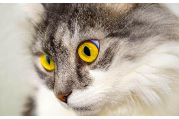 種類によって性格が違う?人懐っこい猫の種類と関わり方とは