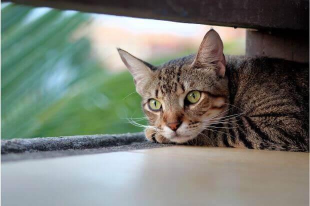 意外に重要!猫のエサ入れやエサ台の高さについて