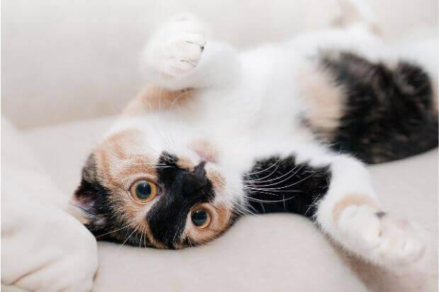 ケージは買うべき?猫にとってケージが必要な理由と正しい使い方