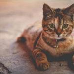 猫も風邪を引く?猫がくしゃみや鼻水を出す原因と対処法