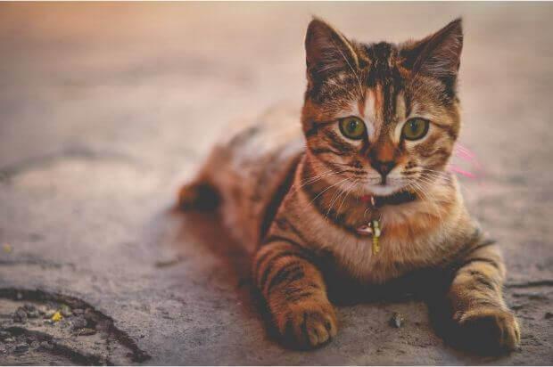 猫 くしゃみ 多い