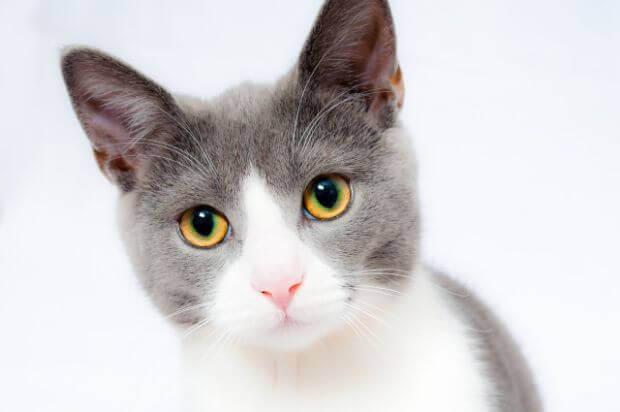 飼い主さんなら考えておきたい。猫の避妊手術について