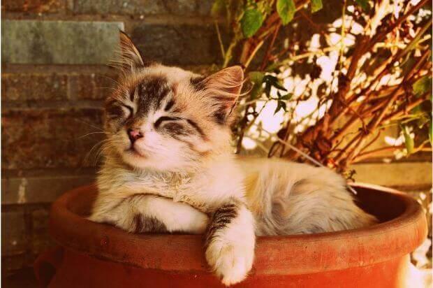 起き場所で猫の機嫌も変わる!猫のトイレの置き場所について