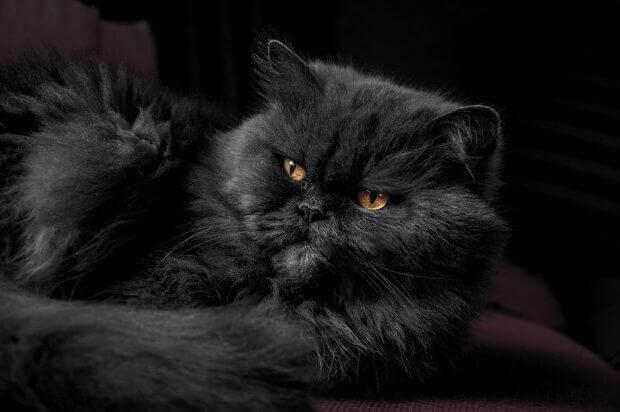 命に関わることも!猫が茶色いものを吐いた時の原因や対処法