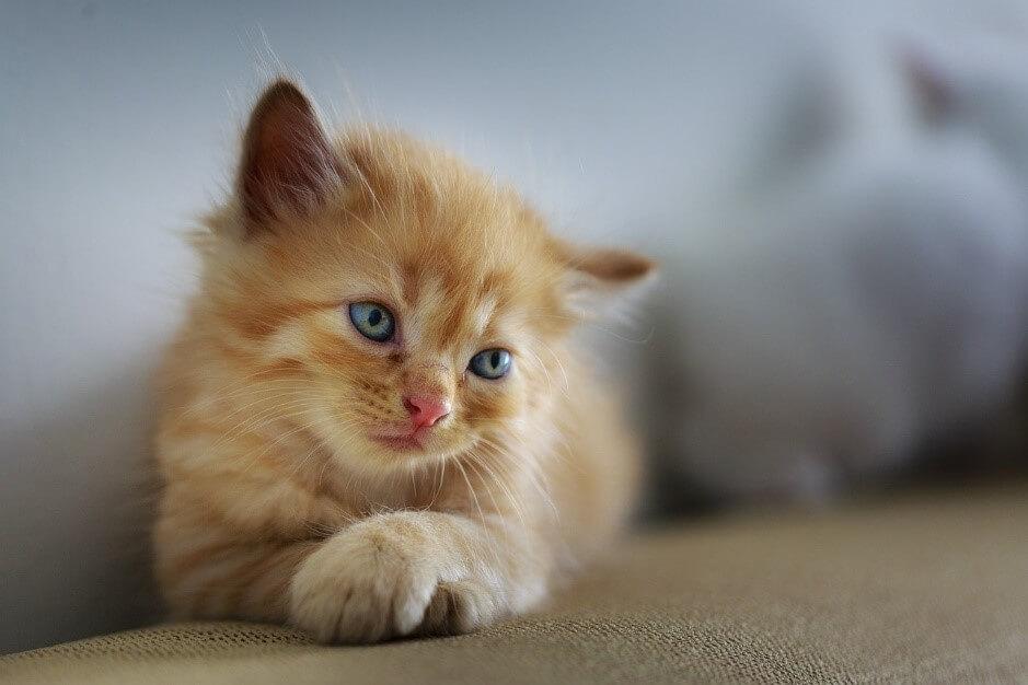 こうすれば分かる!猫の気持ちや感情による鳴き声の変化について