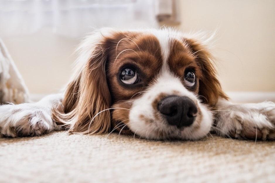 犬はこんなことを考えている!犬が目をそらす意味と接し方について