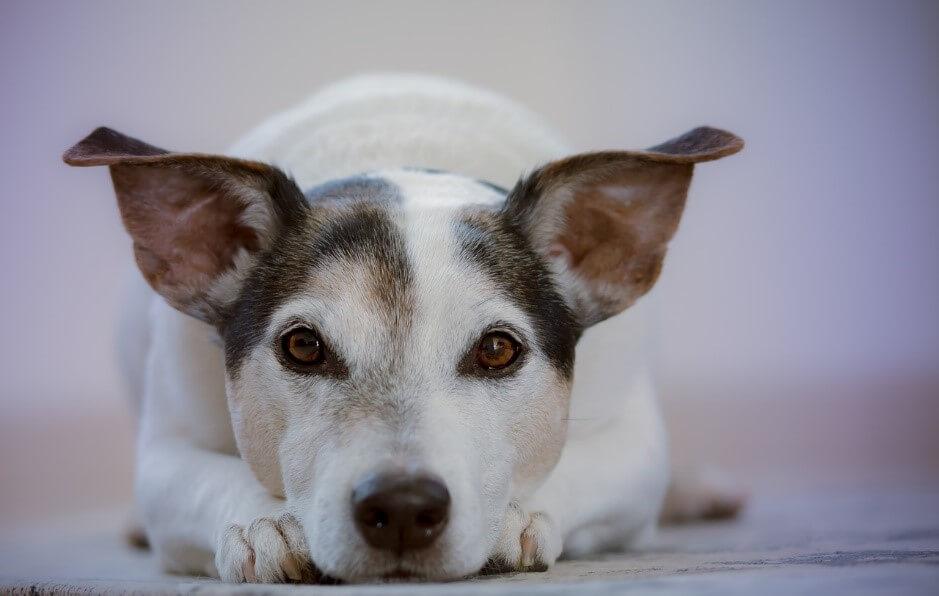 気づいてあげたい!犬のストレスサインの原因と対策について