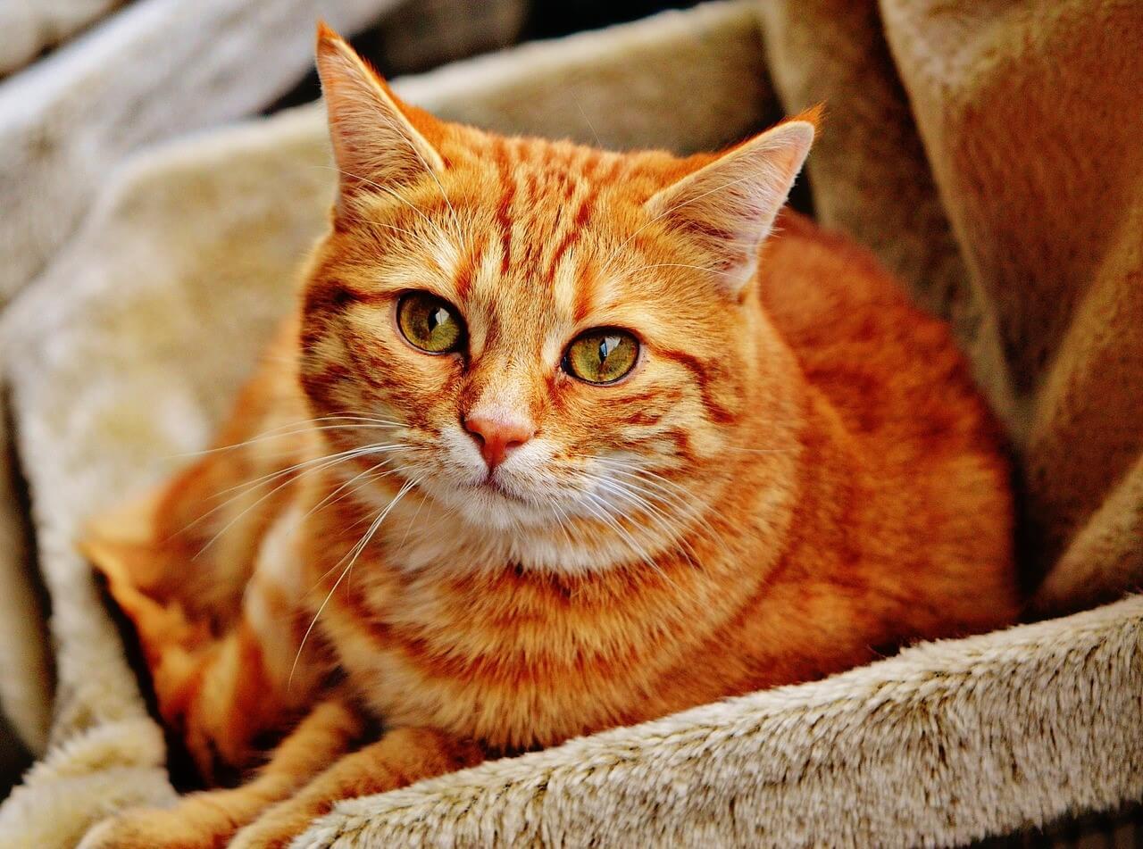 どう対処すればいい?猫の分離不安症について、その原因と対策