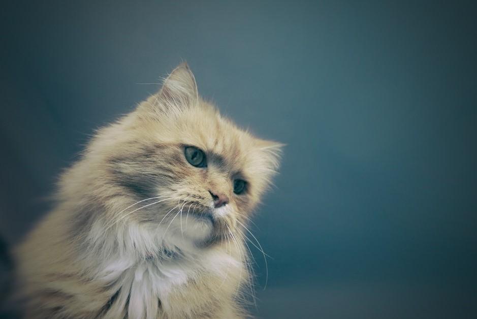 軽視すると危険!留守番させることで猫が感じるストレスについて