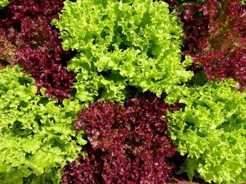 植物を元気に育てるために!水耕栽培の肥料投入・交換のタイミングについて