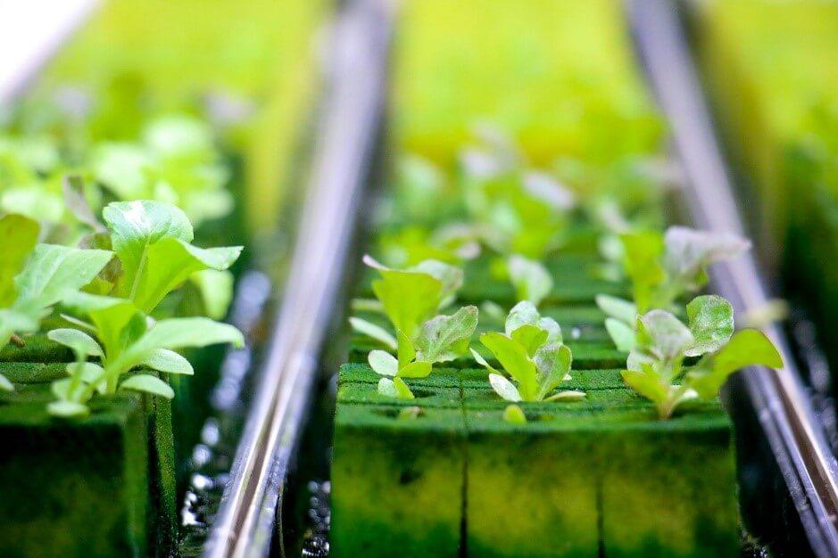 家庭用でもOK!スポンジではじめる水耕栽培の方法について
