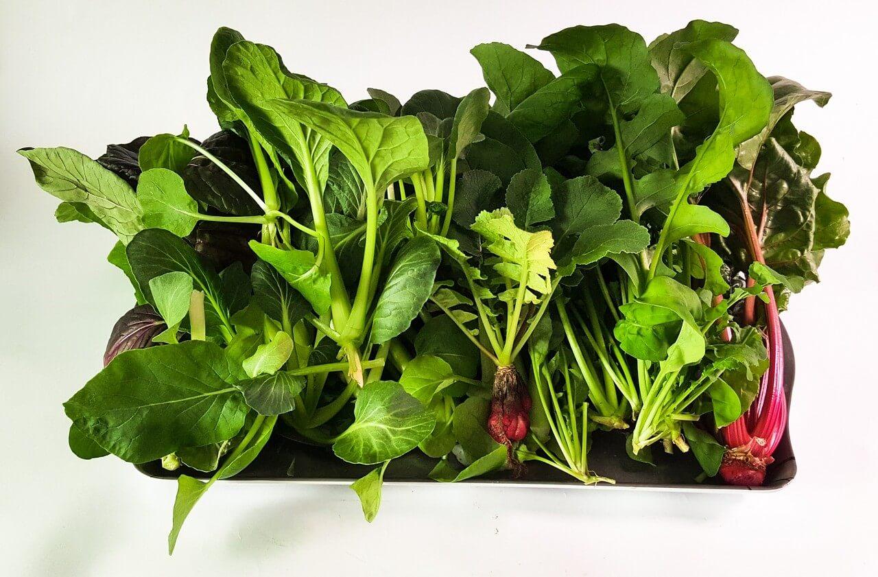 こんな野菜も育てられる!室内で楽しむ家庭菜園と栽培できる野菜について