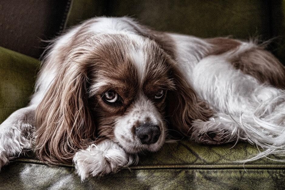 こんなトラブルに注意!ペットシッターと飼い主の間でよくあるトラブルについて