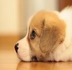 犬猫介護検定講座・通信教育