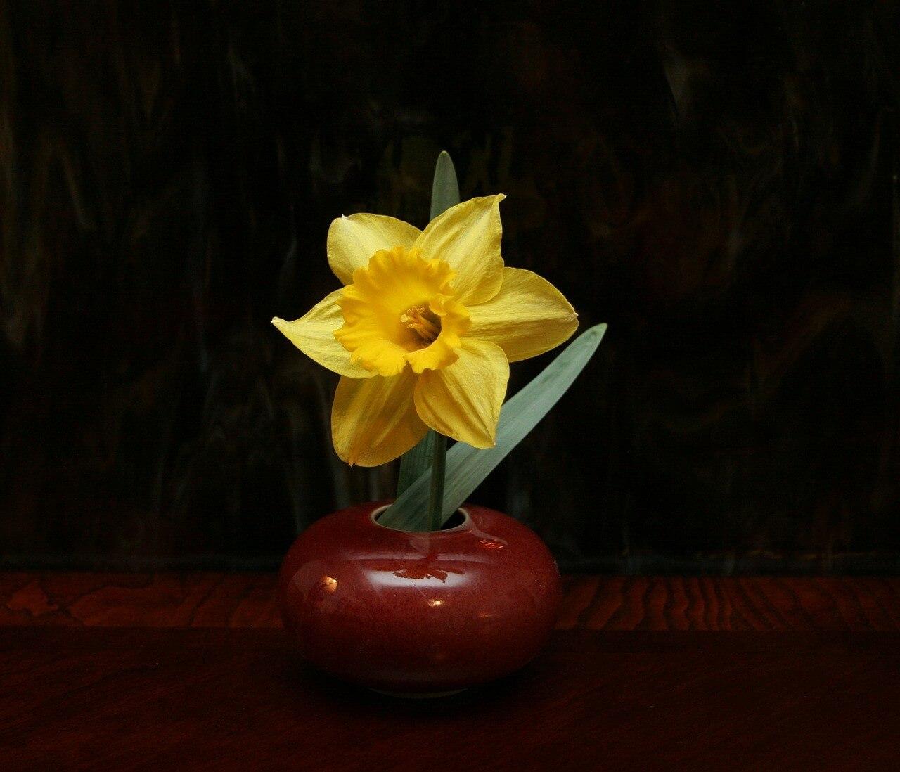 実はこんな違いが!華道と生け花の意味と違いについて
