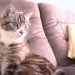 猫の育て方アドバイザーW資格取得講座