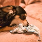犬猫ストレスケアアドバイザーW資格取得講座