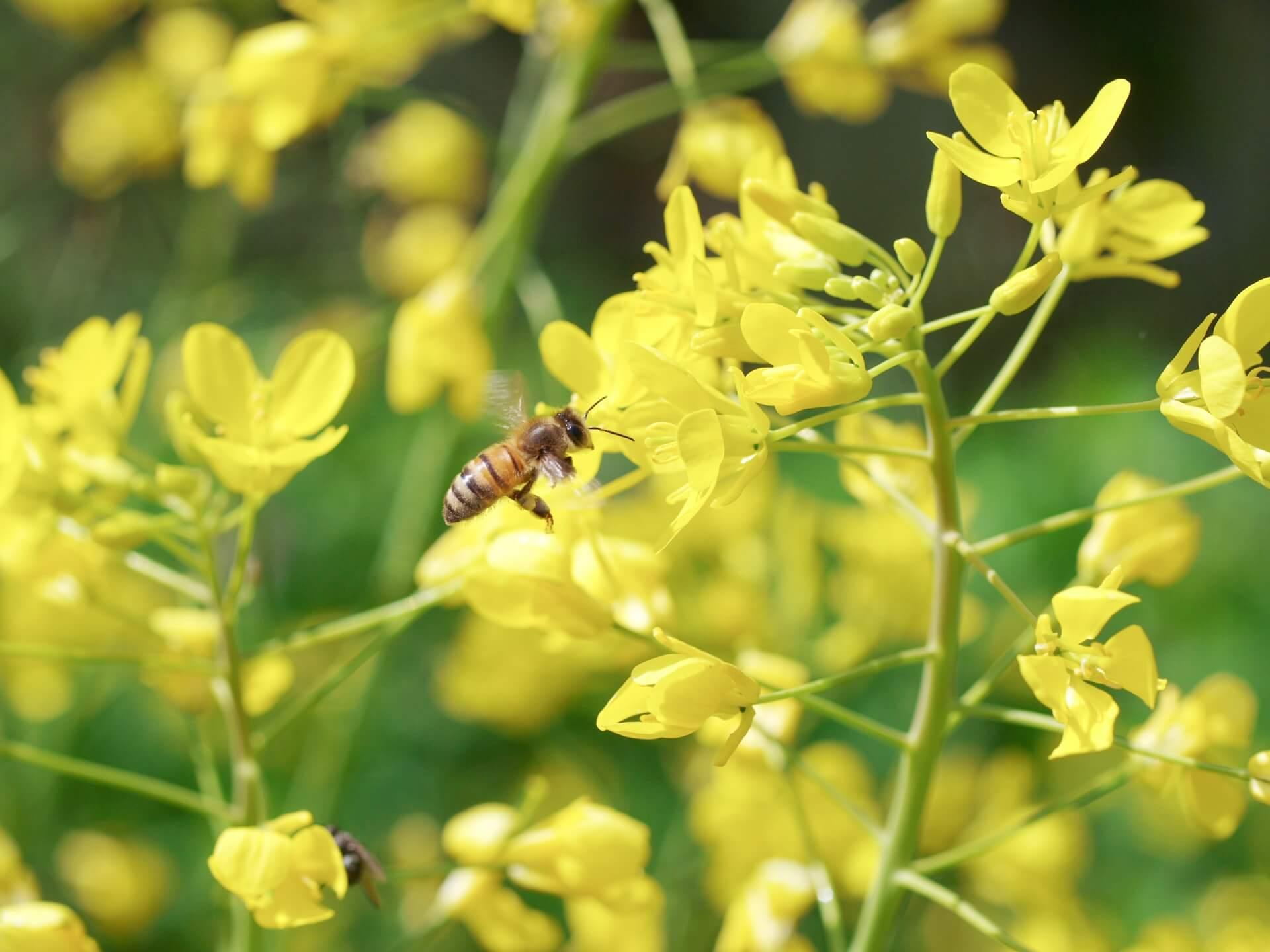 蜂蜜養蜂士