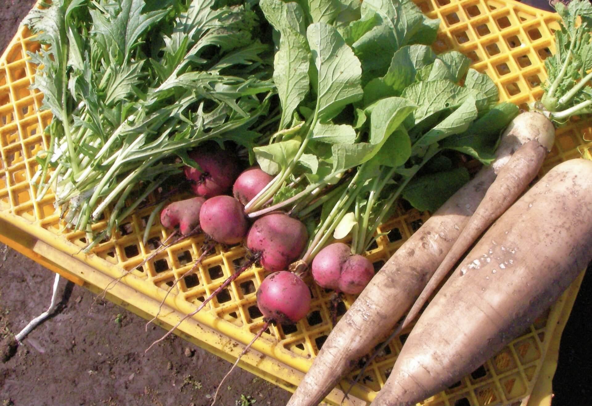 野菜パティシエ